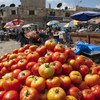 Tomato stand in market near Ramallah's main mosque.