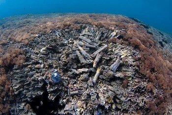 A pesca com bomba destrói os corais e o habitat que fornece o sistema de suporte de vida para espécies que habitam os recifes de corais.