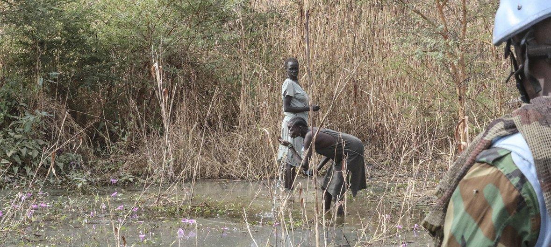 Des Casques bleus de la Mission des Nations Unies au Soudan du Sud (MINUSS) mènent une patrouille de collecte de bois de chauffage pour les femmes du site de la protection des civils de la mission à Bentiu.