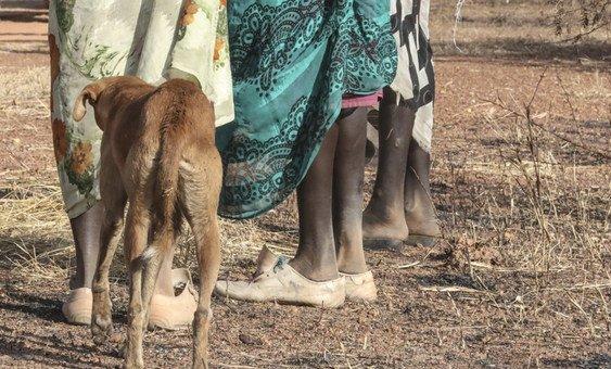最近几周报道了强奸和性侵犯事件后,联合国南苏丹特派团在团结州北部加强了道路巡逻。