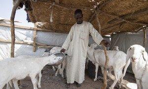 Mohammed Lawan Goni, mkimbizi kutoka Nigeria akisali na familia yake katika kambi ya Minawao nchini Cameroon.