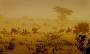Men on camels and donkeys travel through a dust storm in the desert near the western city of Mao, in the Kanem Region of Chad.