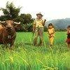 Agricultores de Laos, participan en un programa de cooperación sur sur.
