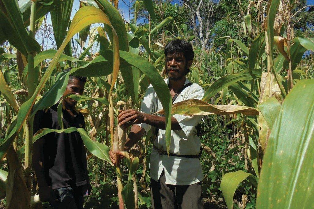东帝汶参与南南合作。