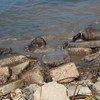 A Gaza, les eaux usées s'écoulent dans la mer, contaminant l'aquifère côtier.