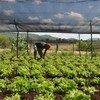 Cabo Verde tem projetos para combater a seca