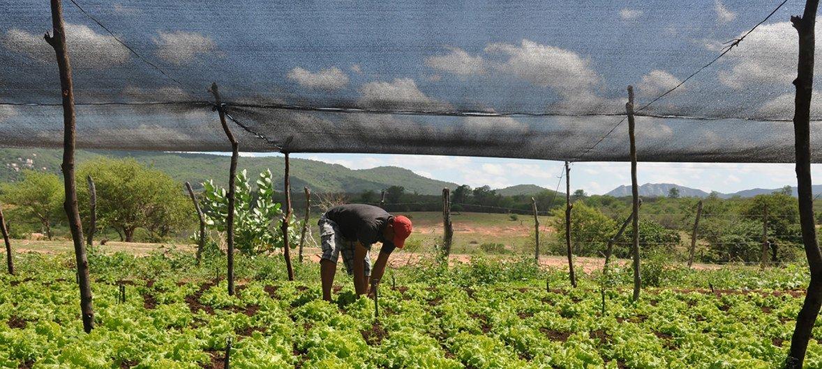Em países como Brasil e Estados Unidos, tem aumentado o número de pequenas operações agrícolas