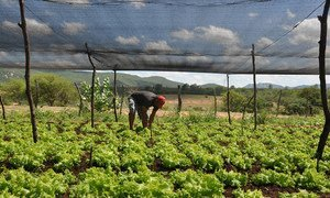World Bank Project to boost sustainable agriculture in Brazil