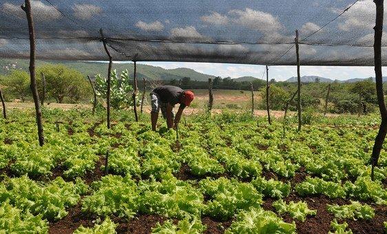 Un projet de la Banque mondiale veut encourager l'agriculture durable au Brésil.