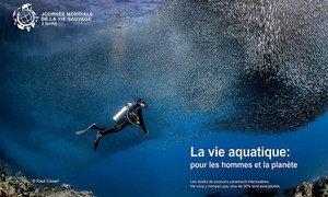 Journée mondiale de la vie sauvage : « La vie aquatique : pour les hommes et la planète »