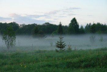 七月,俄罗斯沃洛格达州的森林郁郁葱葱。