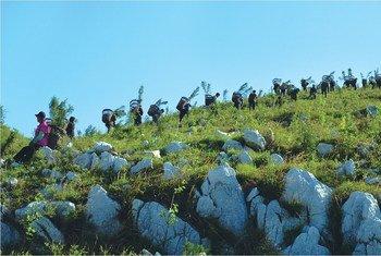 Plantation d'arbres sur des collines rocailleuses dans la région de Tianjin, en Chine.