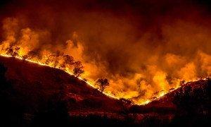 Incêndios florestais ocorrem nos hemisférios Norte e Sul.