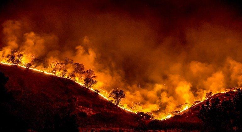 Un incendio arrasa los bosques de California.