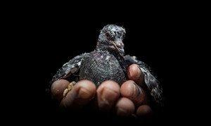 Абу Джассим был вынужден покинуть свой дом в Ираке, но не мог оставить своих голубей