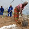 Women in the Copperbelt Province of Zambia work in a greenhouse they built to increase the production capacity of vegetables they sell on the local market. (file 2015)