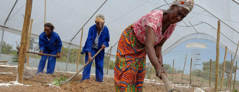 Mujeres trabajando en un invernadero que construyeron para aumentar la capacidad de producción de verduras que venden en el mercado local de la provincia de Copperbelt en Zambia. Foto de archivo.