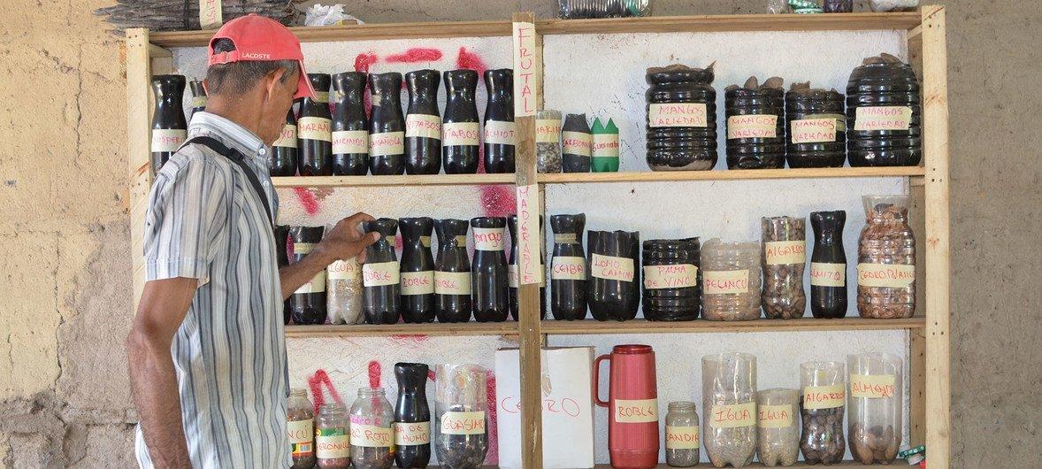 En los recién construidos bancos de semillas, las especies se catalogan con los nombres de las especies para que los agricultores locales puedan distribuirlas e intercambiarlas con otras comunidades.