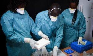Des experts examinent un chargement de cocaïne en Guinée-Bissau