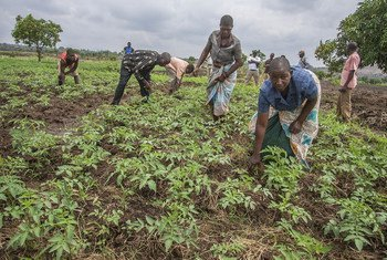 Segundo o Programa da ONU para o Meio Ambiente, Pnuma, a mudança climática já afeta comunidades e economias em todo o mundo e esses impactos continuarão a intensificar-se.