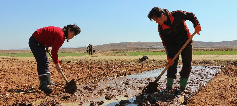 В Северной Корее из-за засухи и наводнений собран самый низкий урожай за последние 10 лет