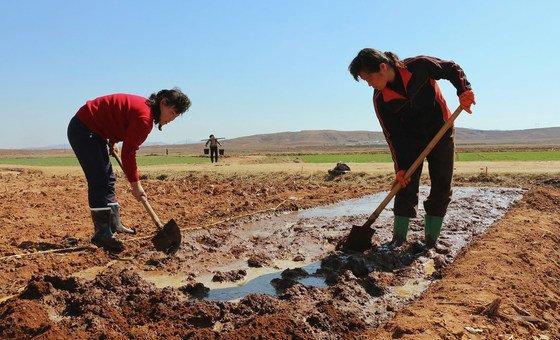 Em média, 70 países são afetados por secas todos os anos.