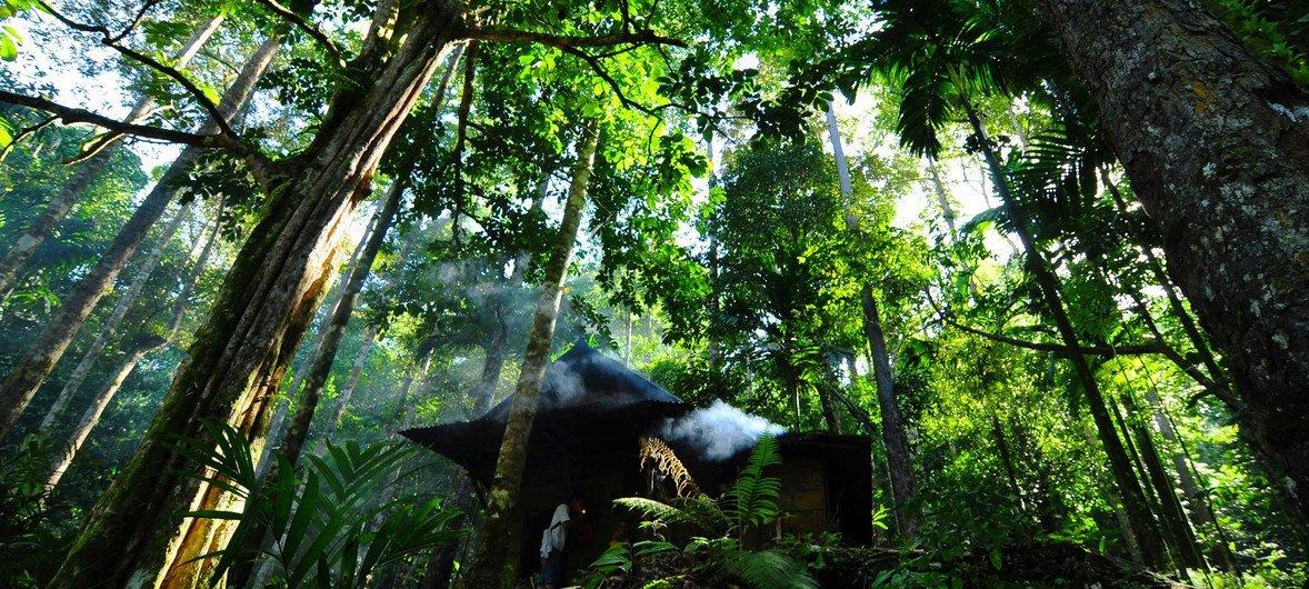 ODS15: Cinco cosas que debes conocer sobre los bosques