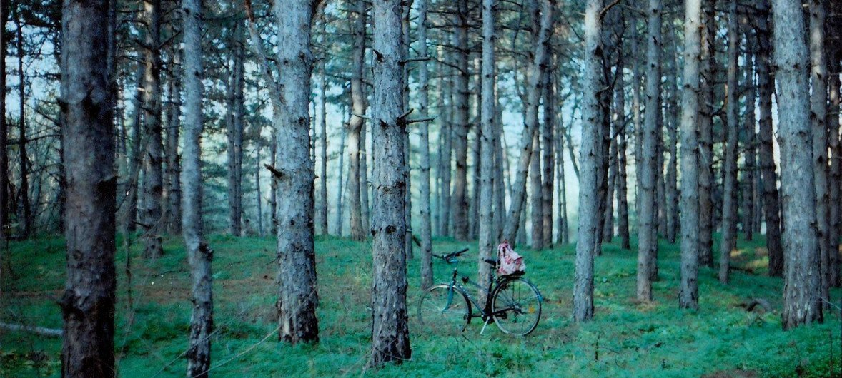 【专题报道】从虚拟树苗到真实造林:指尖上的绿色行动
