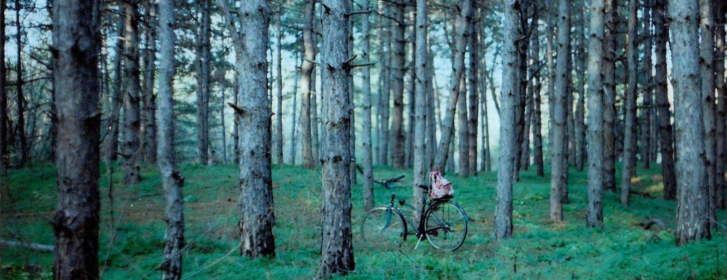 My favorite place by Olga Lavrushko, Ukraine. One of the winners of the International Forest Photograph Contest.
