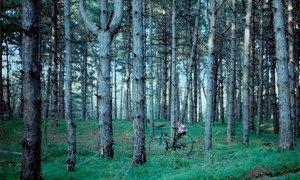 """""""Mi lugar favorito"""", una de las imágenes ganadoras del Concurso Internacional de Fotografía de los Bosques."""