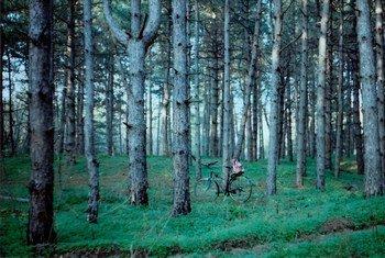 国际森林摄影大赛获奖作品之一,由来自乌克兰的奥尔加所拍摄的作品《我最爱的地方》。