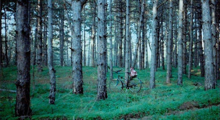 联合国报告:世界森林面积持续萎缩 必须立即行动保护森林生物多样性