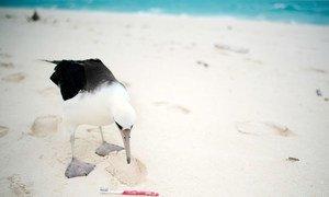 Animais marinhos são prejudicados pelo plástico nos oceanos