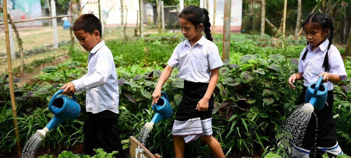 Des enfants de l'école primaire Ban Bor, du district de Xay, en République démocratique populaire lao arrosent un potager. Mai 2019.