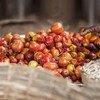 Un tercio de la comida se desperdicia o se pierde desde que es recogida hasta que llega al consumidor.