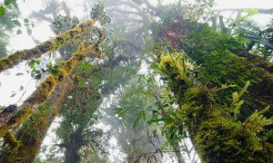 Papua New Guinea's rare cloud forests are a high elevation rainforest characterised by low-level cloud cover. (14 June 2011)