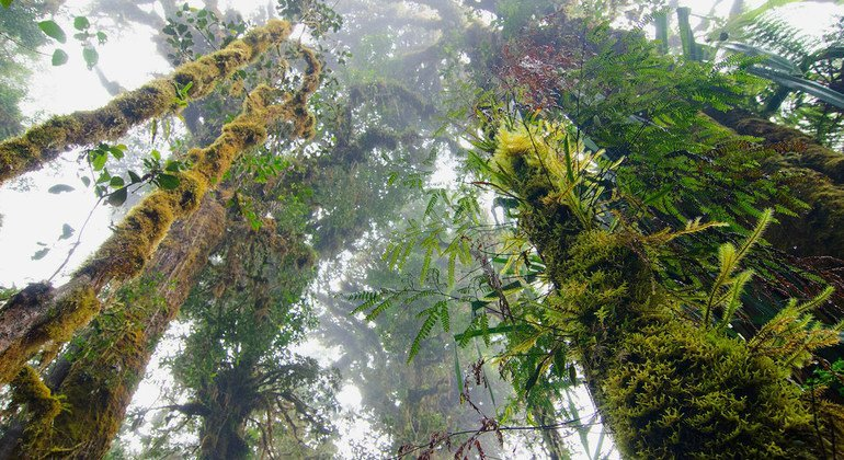 New UN forestry project bids to help countries meet climate change commitments