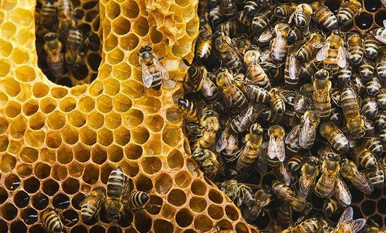 Angola era um dos maioresprodutoresglobaisde mel.