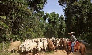 Mais de 50% do PIB do Mato Grosso está relacionado a agricultura e pecuária.