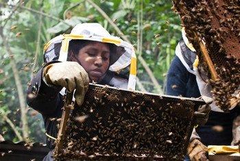 A través de la experiencia y la formación, Manuela, una apicultura guatemalteca, superó su miedo a las abejas.
