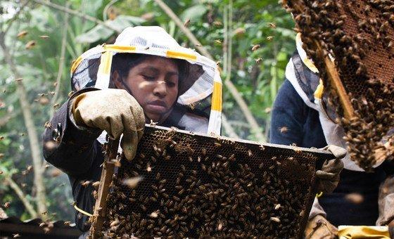 经过5个月的培训,曼努埃拉克服了被蜜蜂蛰的恐惧,如今,蜜蜂已经成了她的好朋友。