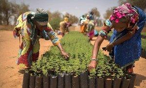 Desde que se tornou parceira da instituição em 2006, a FAO já apoiou mais de 130 governos na implementação de 200 projetos no valor de quase US$ 1 bilhão.