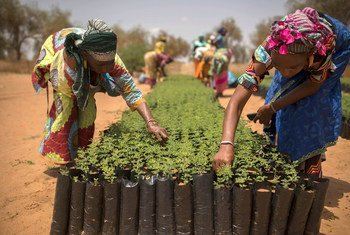 Segundo a FAO, mais de 6000 espécies de plantas foram cultivadas para alimentação, mas menos de 200 delas contribuem significativamente para a produção de alimentos nos níveis global, regional ou nacional.