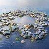 """由欧尚尼克斯公司(Oceanix)和建筑师比亚克·英格斯设计的""""海洋城市""""概念图。"""