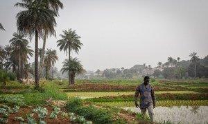 Parceria envolve apoio ao desenvolvimento econômico e meio ambiente