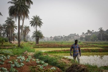 Guiné-Bissau adere à Convenção da Água um ano depois do Gana, em 2020