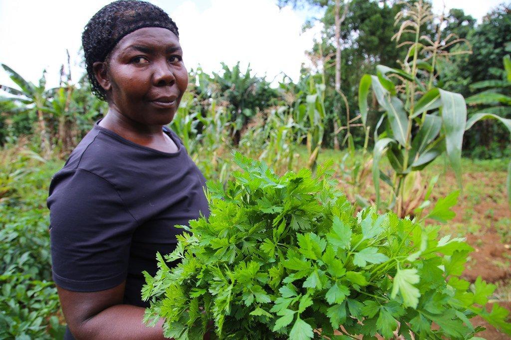 Les agriculteurs de São Tomé e Príncipe sont désormais en mesure d'irriguer leurs terres pendant la saison sèche, ce qui augmente la productivité. (archives 2017)