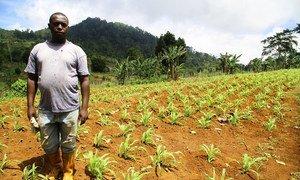 La ONU ayuda a los agricultores de  São Tomé y Príncipe durante la temporada seca.