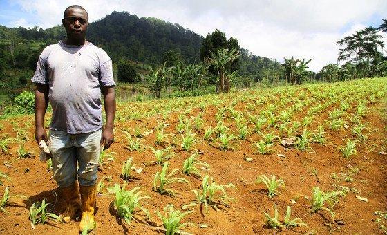 Em São Tomé e Príncipe, o Pnud ajuda agricultores durante a época seca