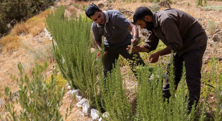 FROM THE FIELD: Balancing Morocco's indigenous culture and conservation
